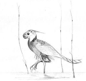 Bissekty Formation - Caenagnathasia