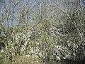 Calotmul (Yaxkukul), Yucatán (15).jpg