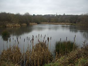 Shire Brook Valley Local Nature Reserve - Carr Forge Dam with housing of Woodhouse area in the background