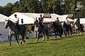 Carroussel à 16 chevaux montés Mondial du percheron 2011 Cl J Weber01 (24083509495).jpg