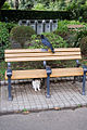 Cat fearing crow@Hibiya Park.jpg