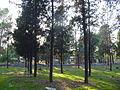 Chabolas - en bici por el parque forestal de entrevías.jpg