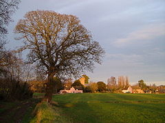 Large tree on the left of a field in the foreground with buildings in the distance.