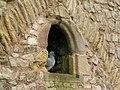 Chepstow castle resident - geograph.org.uk - 1125389.jpg