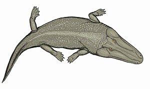 Anisian - Cherninia, giant temnospondyl from India