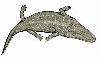 Anisian - Cherninia, giant temnospondyl from India