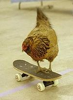 Chicken on a skateboard
