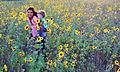 Children Walking in Prairie Sunflowers (28998541221).jpg