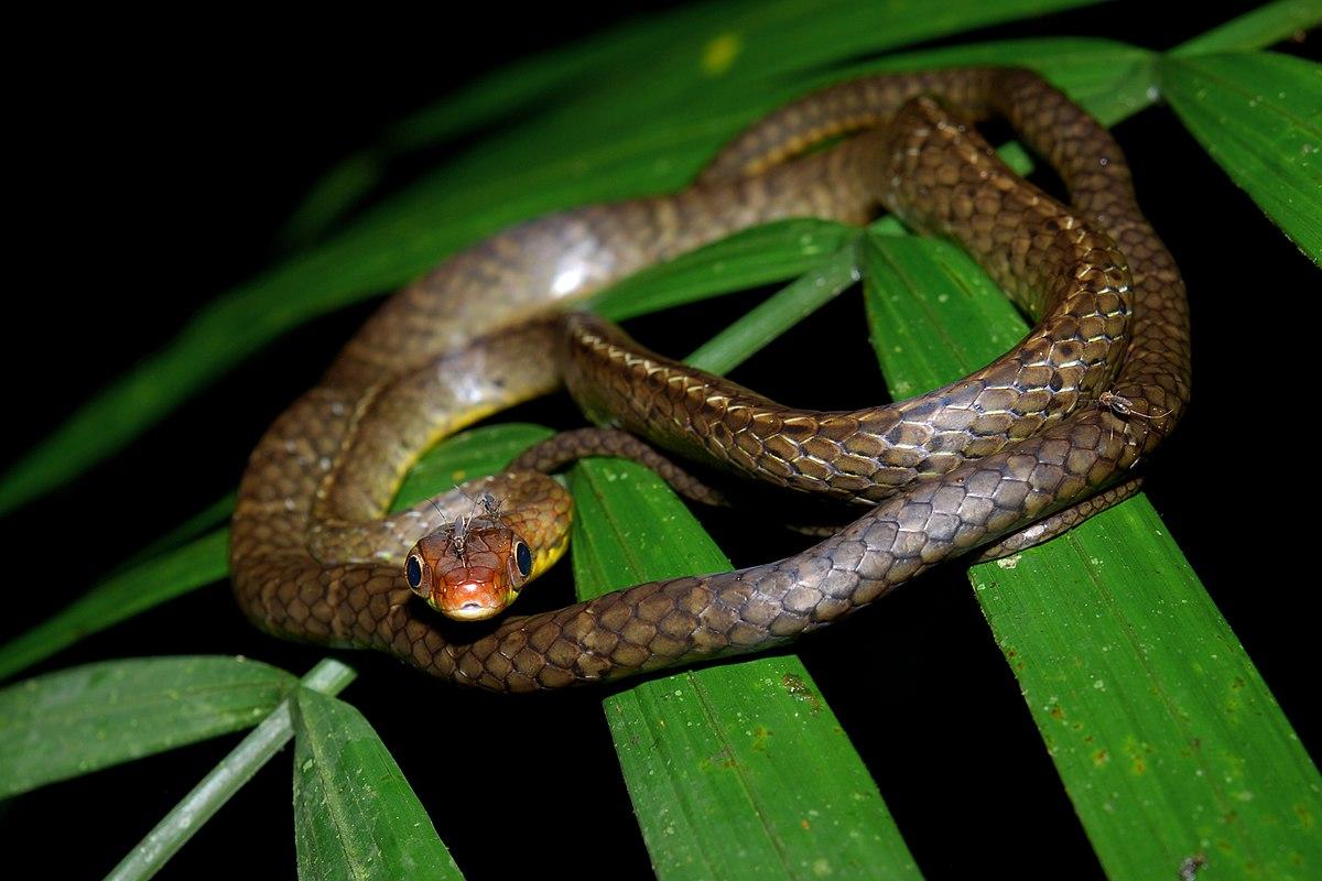 Snakes On St James Island Sc