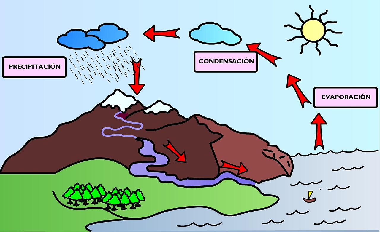 The extraordinary water cycle, and much else, in year 5