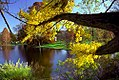"Cincinnati - Spring Grove Cemetery & Arboretum ""Geyser Lake - A Splash of Autumn Color"" (4103192137).jpg"