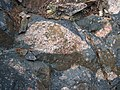 Clast-rich impact pseudotachylite (Sudbury Breccia, Paleoproterozoic, 1.85 Ga; Windy Lake Northwest roadcut, Sudbury Impact Structure, Ontario, Canada) 45 (46841568715).jpg