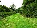 Clear Wood Bridleway - geograph.org.uk - 532605.jpg