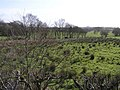 Cloghfin Townland - geograph.org.uk - 1200373.jpg