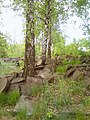 Cmentarz żydowski na Bródnie 01.jpg