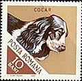 Cocker-Spaniel-Canis-lupus-familiaris Romania 1965.jpg