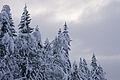 Cold November (5204309343).jpg