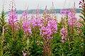 Colorful Wildflowers (Unsplash).jpg