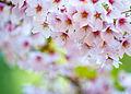 Colours of Spring (3486325902).jpg
