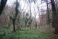 Combe Meadow - geograph.org.uk - 1658995.jpg