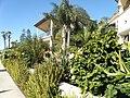 Coronado, CA, USA - panoramio (3).jpg