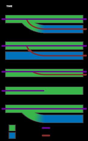congruence model wiki