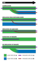 Cospeciation (5 processes) - with key.png