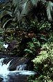 Costa Rica Tabacon - panoramio (1).jpg