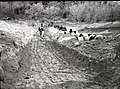 Covered sewage trench exposed- South Entrance sewage disposal field. ; ZION Museum and Archives Image 006 04 003 ; ZION 10304 (521107db079847a2bdf81c488fc9cbeb).jpg
