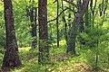 Cranberry Swamp Natural Area (31) (17907818189).jpg