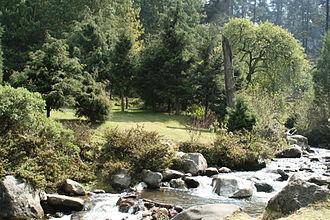 Magdalena Contreras - Creek in Los Dinamos