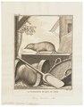 Crocidura murina - 1700-1880 - Print - Iconographia Zoologica - Special Collections University of Amsterdam - UBA01 IZ20900121.tif