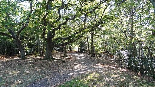 Croham Hurst wood