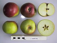 Cross section of Banffy Pal, National Fruit Collection (acc. 1948-354).jpg