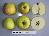 Cross section of Chehalis, National Fruit Collection (acc. 1974-051).jpg