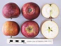 Cross section of Cherry Cox (Stogden), National Fruit Collection (acc. 1984-173).jpg