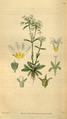 Curtis's Botanical Magazine, Plate 3099 (Volume 58, 1831).png