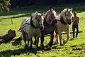 Débardage JEAN BAPTISTE RICARD mondial du cheval percheron 2011Cl J Weber06 (24000887931).jpg