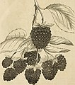 D. Miller, Jr.'s descriptive catalogue of fruit and ornamental trees, shrubs, plants, vines, &c., &c., cultivated and for sale by the Cumberland Nurseries, Middlesex Station, on the Cumberland Valley (14757972811).jpg