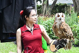 Queen Sirikit Park - Siberian Eagle Owl shown for Event of Biodiversity.