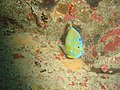 DSC00253 - peixe - Naufrágio e recifes de coral no Nilo.jpg