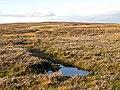 Damp ground on Longlaw End - geograph.org.uk - 1619274.jpg