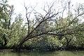 De Biesbosch P1290077.jpg