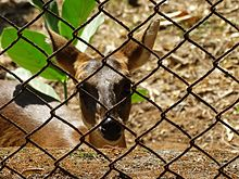 Deer captivity.jpg