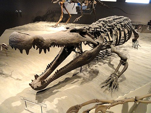 top 10 largest crocodiles ever recorded our planet
