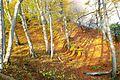 Der Herbstwald am Königsstuhl.jpg