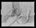 Detalj knytband schabrak - Livrustkammaren - 71224.tif