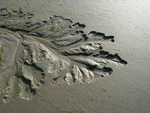 Developing Saltmarsh Channel. Wonderful shape ...