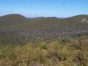 Phytophthora cinnamomi - A heath landscape in the Stirling Range, Western Australia, with a dieback-infested valley in the mid ground
