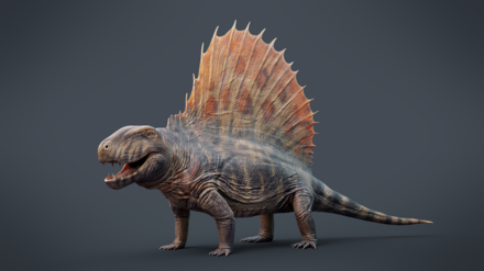 Dimetrodon grandis, a synapsid from the early Permian